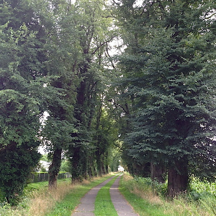 Ayurveda - der natürliche Weg zur Gesundheit